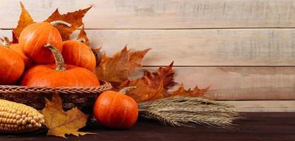 récolte d'automne et action de grâces. citrouilles mûres, maïs et blé photo