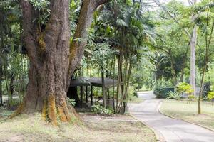 grand arbre tropical avec une belle mousse jaune sur l'écorce. photo