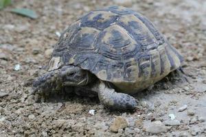une tortue dans la ville photo