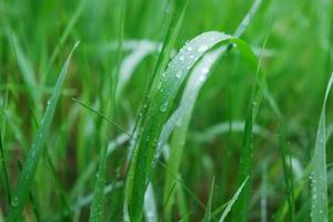 herbe verte avec des gouttes d'eau à la surface photo