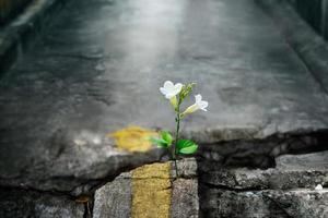 fleur blanche poussant sur la rue du crack, flou artistique, texte vierge photo