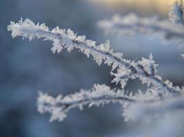 flocons de neige perchés sur une belle branche sèche photo