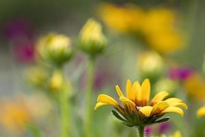 gros plan de la plante à fleurs jaunes photo