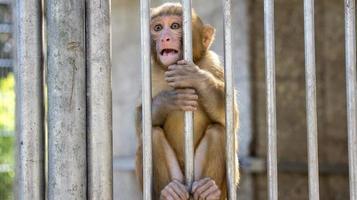 portrait d'un petit singe photo
