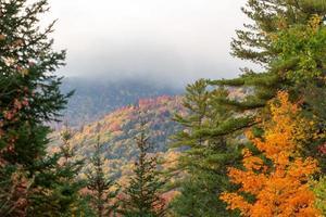 beau paysage de forêt naturelle verte photo