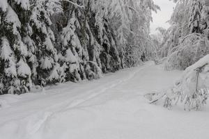 route de campagne étroite dans une forêt enneigée. photo