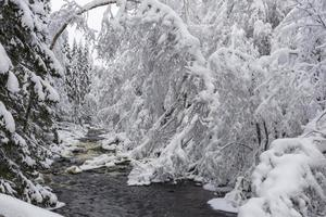petit ruisseau dans une forêt avec beaucoup de neige. photo