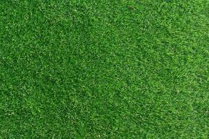 fond de champ d'herbe verte photo