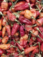 tas de piment frais photo