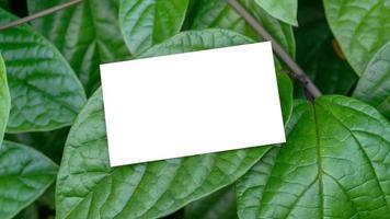 carte de visite blanche sur des feuilles vertes naturelles pour la maquette photo