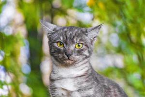 beau chat mignon aux yeux jaunes fond de nature verte minsk. photo