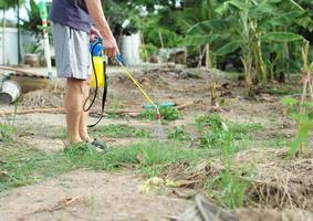 vue arrière du jardinier masculin en tenue décontractée pulvérisant l'insecticide photo