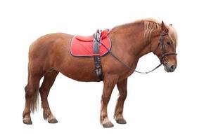 cheval brun sur fond blanc photo