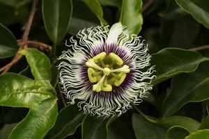 fleur tropicale fantaisiste parmi le feuillage vert photo
