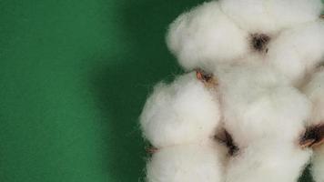 gros plan de fleurs de coton sur fond vert. photo