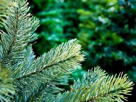 feuillage artificiel d'arbre de noël artificiel photo