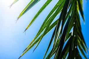 feuilles de palmier comme fond naturel photo