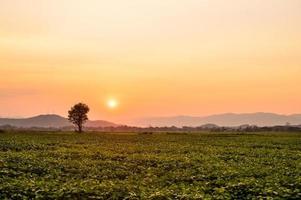 coucher de soleil au fond naturel du jardin photo