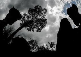 pierre en forme de coupe. le parc national de pa hin ngam à chaiyaphum, thaïlande photo