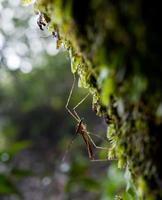 rosée du matin. gouttes d'eau brillante sur la toile d'araignée sur fond de forêt verte. macro. bokeh photo