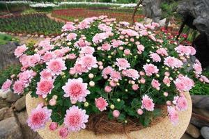 Royal flora ratchaphruek exposition internationale d'horticulture pour sa majesté le roi à chiangmai, thaïlande photo