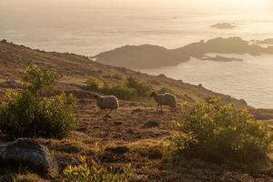 au petit matin de l'île de camping, les rochers et le soleil forment un paysage magnifique photo