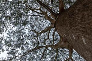 grands arbres avec des regards étranges dans le parc photo