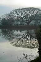 conception graphique au lac photo