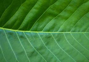 fond de texture de feuille verte photo