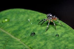 gros plan d'araignée sur une feuille photo