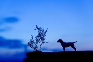 silhouette de chien au fond du coucher du soleil photo