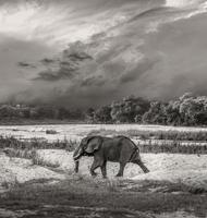image de taureau éléphant photo