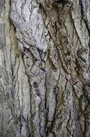écorce d'arbre texturée photo