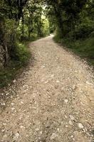 chemin profond dans la forêt photo