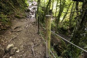 chemin avec du bois dans la forêt photo
