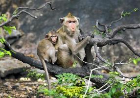 mère et bébé singes à l'état sauvage. photo