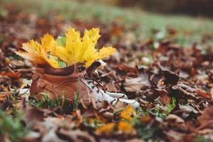 feuilles d'érable jaunes au sol photo