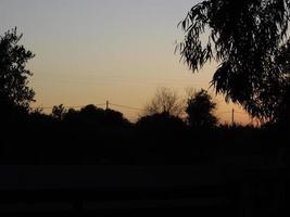 coucher de soleil dans les champs d'oliviers sur l'île de rhodes en grèce photo
