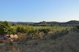 Jardin d'oliviers sur l'île de Rhodes en Grèce photo