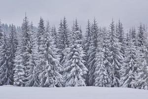 paysage d'hiver féerique avec sapins et chutes de neige. concept de salutations de noël photo