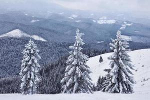 beau paysage d'hiver avec des arbres couverts de neige photo
