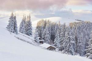 épinettes blanches majestueuses qui brillent par la lumière du soleil. scène hivernale pittoresque et magnifique. emplacement place parc national des carpates, ukraine, europe. station de ski des alpes. ton bleu. bonne année monde de la beauté photo