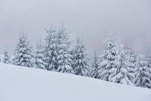 matin hiver paysage de montagne calme avec de beaux sapins glacés et des pistes de ski à travers des congères sur le versant de la montagne photo
