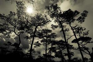 la lumière du soleil sur les arbres de la forêt photo