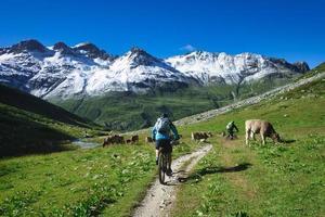 un cycliste de montagne passe devant un troupeau de vaches photo