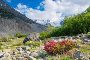 rhododendrons sous des montagnes de glaciers dans les alpes photo