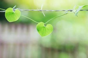 une feuille en forme de coeur sur le fil de fer barbelé. un symbole de maladie cardiaque, de cœur brisé ou de problèmes de santé liés au cœur. photo