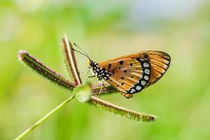 le papillon suce la fleur. photo