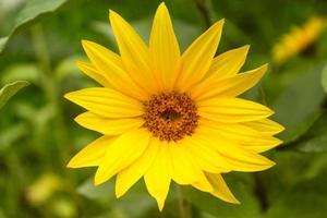 gros plan de belle fleur naturelle photo