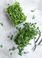 assortiment de micro verts sur table en bois photo